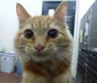 829butchcatsidysantafe18