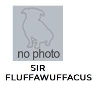1011sirfluffspca18