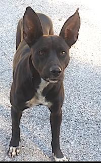 1108houstonearhound18
