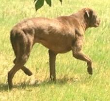 810debstreetdog