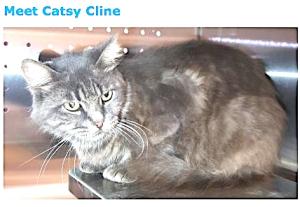 1031catsycline
