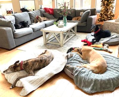 Suzannesleepingdogs