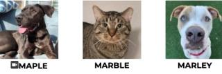 5-01-2020marblemarleytspcafcats
