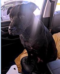522marlowdogdog