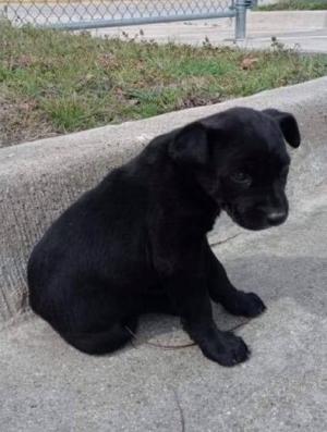 3-01 dumped mesqauite puppy