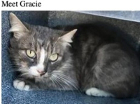 3-01 gracie fort worth cat