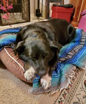 3-05 louie takes a nap