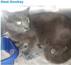 413mesq smokey the cat