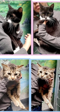 511 helpers kittens