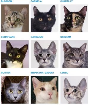 522-HUMANEcats