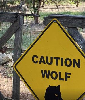716vcautionwolf