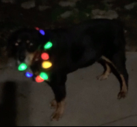 1-11-earl in lights