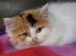 319 kardeaface  orange cat