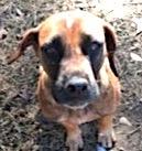 331sandra boydog
