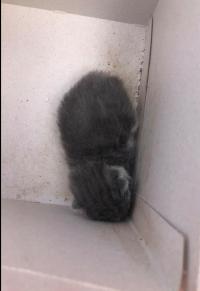 6-01- das dog kitten