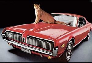 6-04-MESq cougar