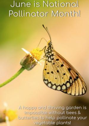 6-09 pollinator