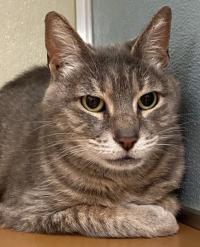 6-14 richardson kittie kat