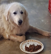 6-15 pyr face eating
