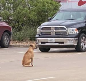 10-02kilgoredog