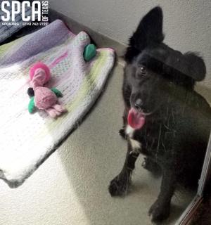 1012-spcablackdog
