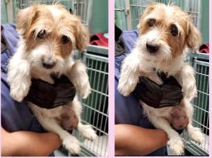 11-19 theroadside terrier