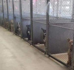1-11 mtpleasantdogs