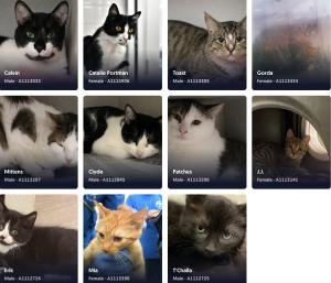 125DAS cats