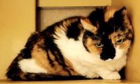 209-10 fw cat honey