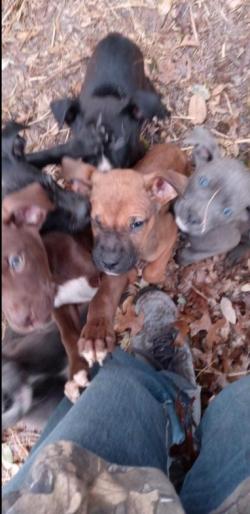 3-03 ldumped puppies