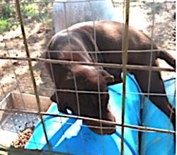 326palestine dog 4r cage