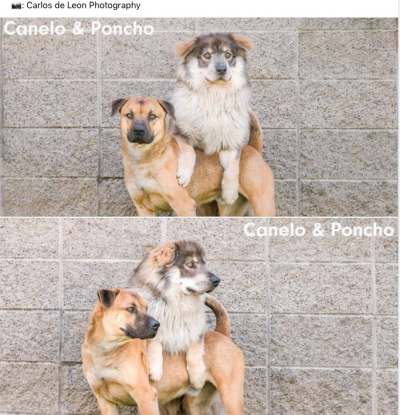 330 fw canelo and poncho