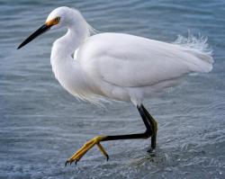 330 fw egret