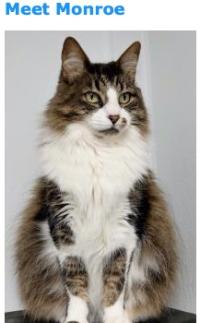 331monroe cat colony