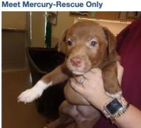 513 puppy mercury