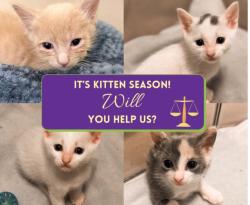 517 takemehome kittenslawyer