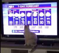 529-31 Simon 7-dayforecast