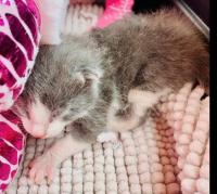 6-01- das dog kitten in cage