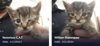 6-15 dallas kittens