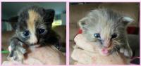 6-23bridgept kittens