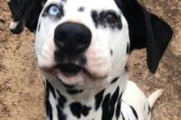 706 dominoface straydog