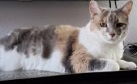 727euless cat