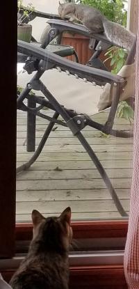 10-02-3 chloe squirrel