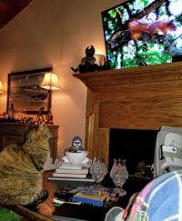 10-02-3 chloe squirrel on tv