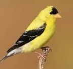 10-02-3 jersey state bird