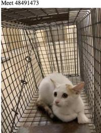 10-20 carrol whitecat