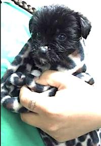 773-24blackie puppy