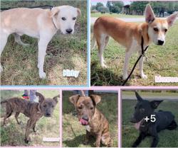 8-23 lanc 5 dogs
