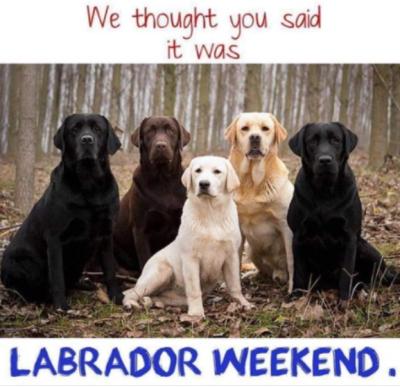 9-07 black dog club labweekend