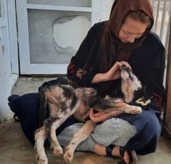 9-24 kabul dog cuddling